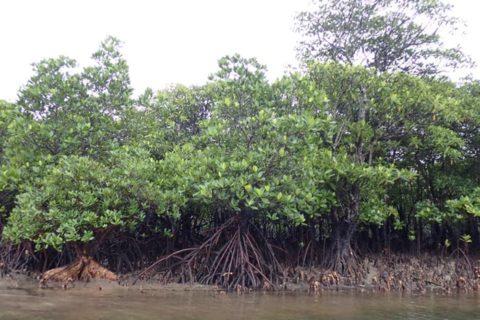 石垣島発離島の旅④~大自然&最西端の島~